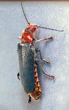 Good Bug Photos Many Insects In Your Garden Are Helpful